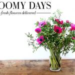 Bloomy Days: Erstmals Exit-Möglichkeit für die Crowd